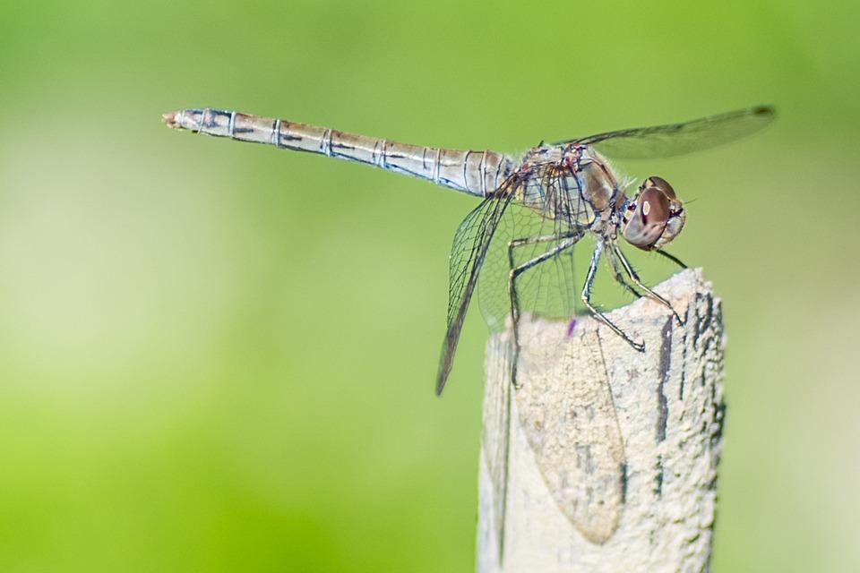 Śląski Państwowy Wojewódzki Inspektor Sanitarny apeluje - chrońmy się przed komarami