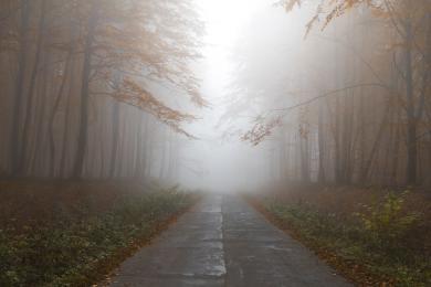 Gęsta mgła. Policjanci przypominają o zasadach używania świateł w pojeździe