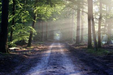 Jesteś właścicielem lasu i chcesz dokonać w nim inwestycji?